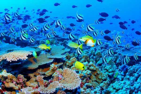 Great_Barrier_Reef_Biodiversity